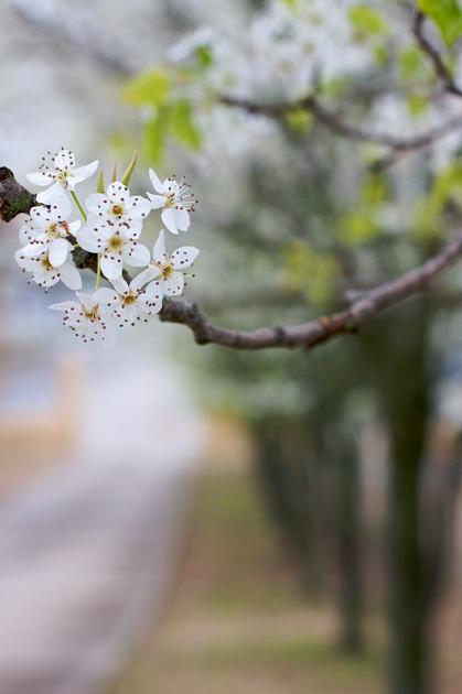 IMAGE: http://rkkwan.zenfolio.com/img/v1/p697130931-4.jpg